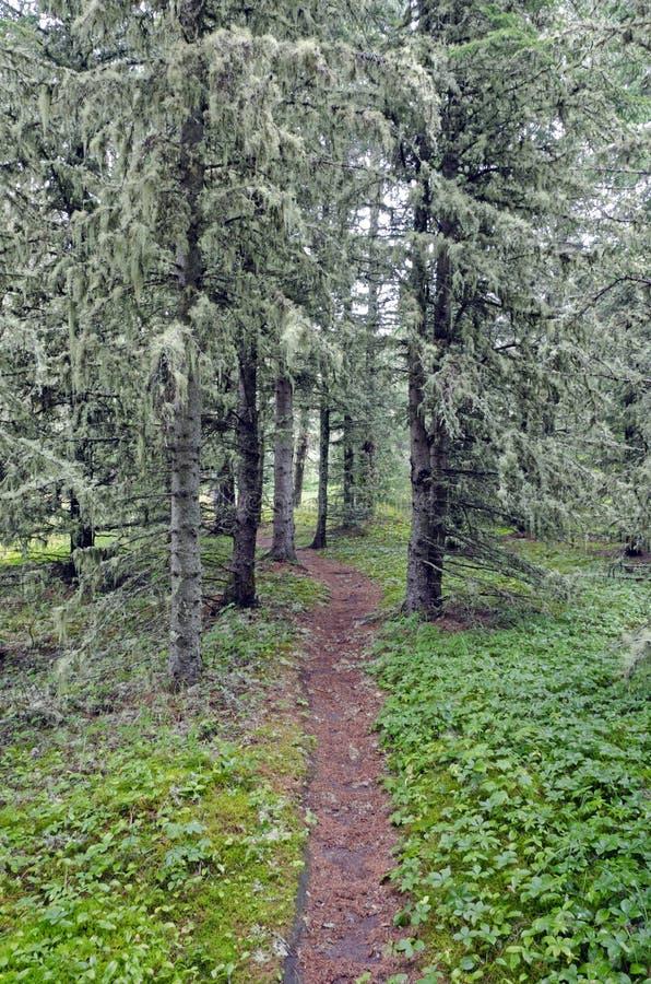 Camino en bosque asoleado foto de archivo libre de regalías