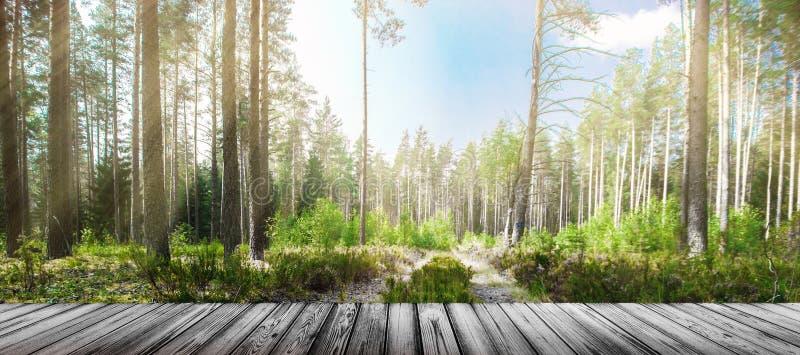 Camino en bosque del verano foto de archivo libre de regalías