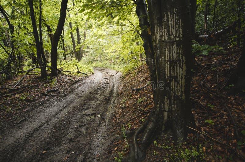 Camino en bosque después de la lluvia fotos de archivo