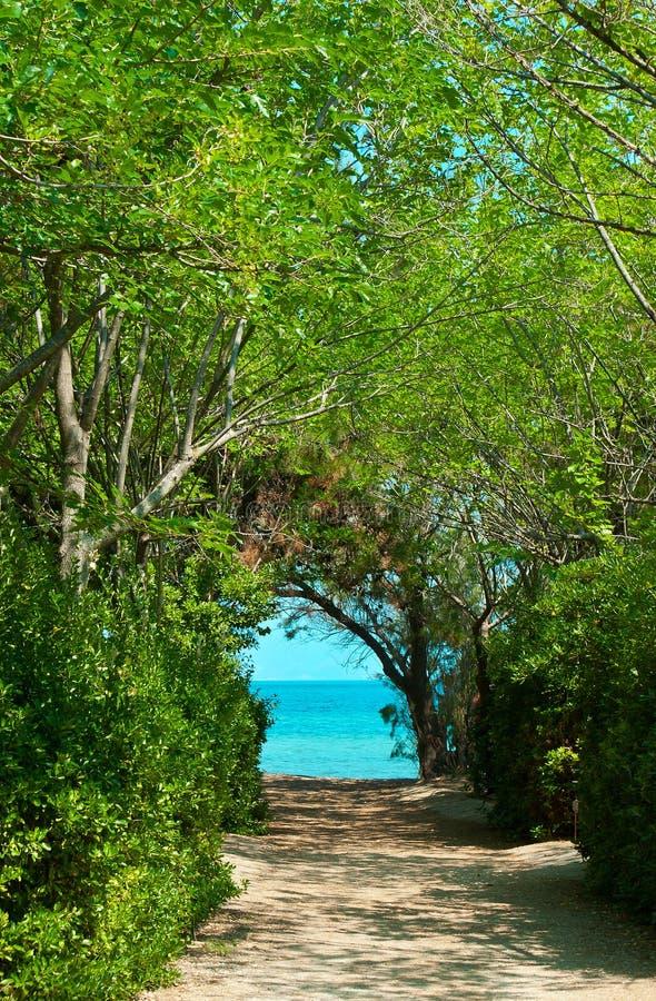 Camino En Bosque Verde Imagen de archivo libre de regalías