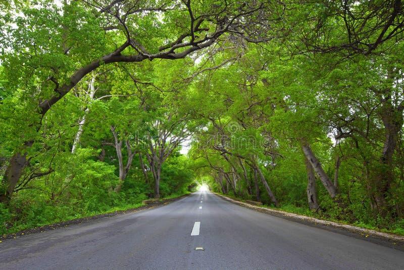Camino en Curaçao fotos de archivo libres de regalías