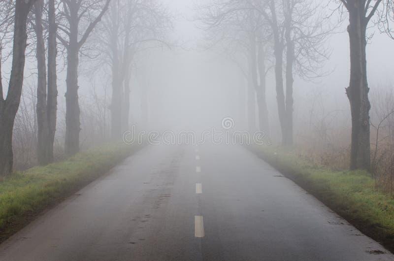 Camino en día de niebla foto de archivo libre de regalías