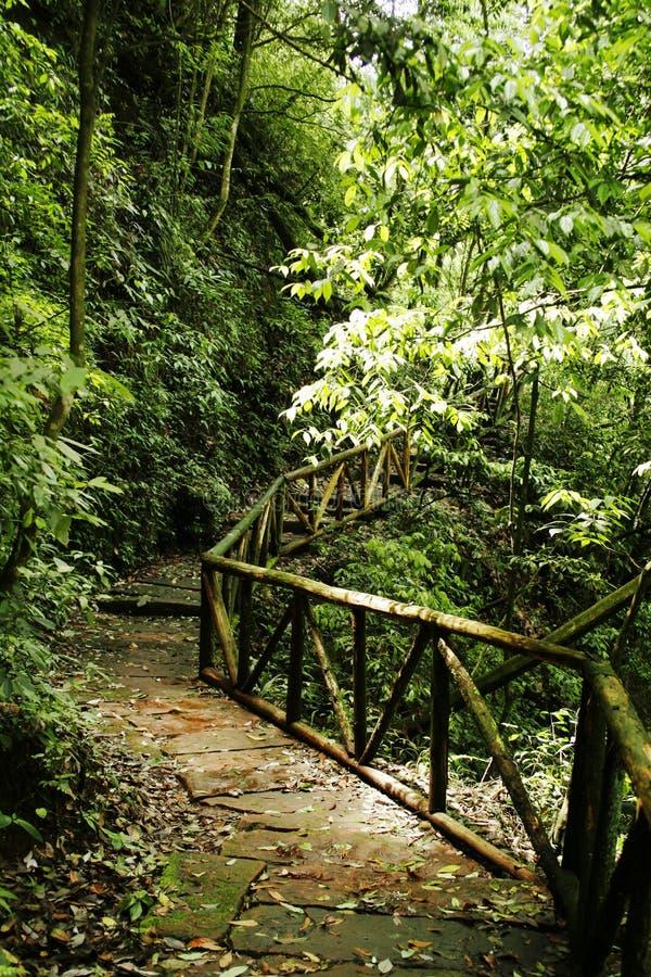 camino en el bosque foto de archivo