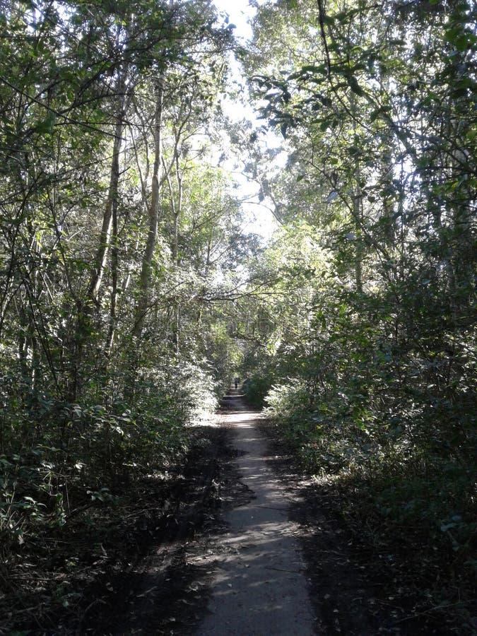 Camino en el bosque imagenes de archivo