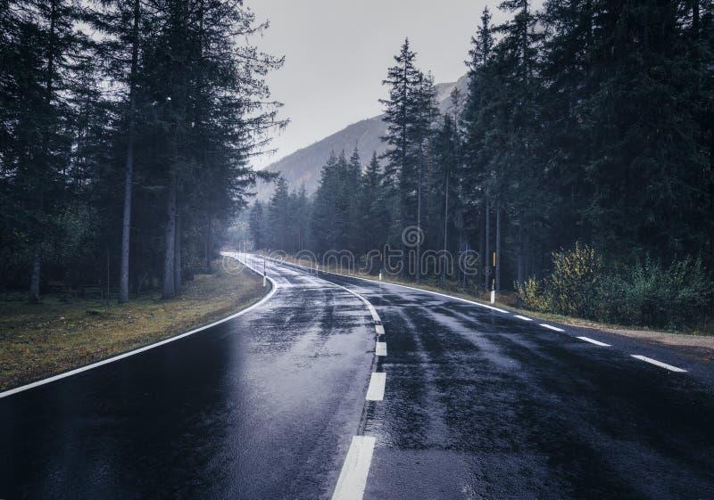 Camino en el bosque de niebla del verano en lluvia Paisaje foto de archivo libre de regalías