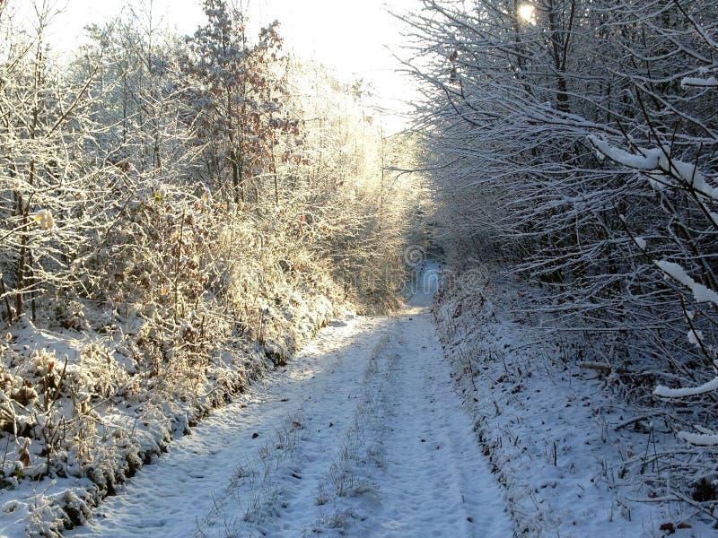 Camino en el bosque del invierno imágenes de archivo libres de regalías