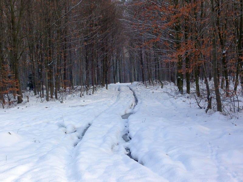 Camino en el bosque del invierno foto de archivo