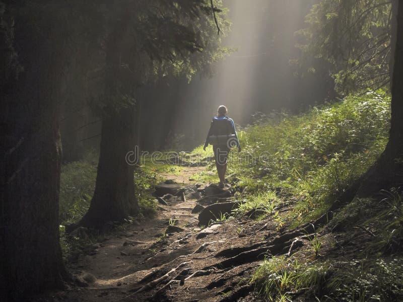 Camino en el bosque encantado imagen de archivo