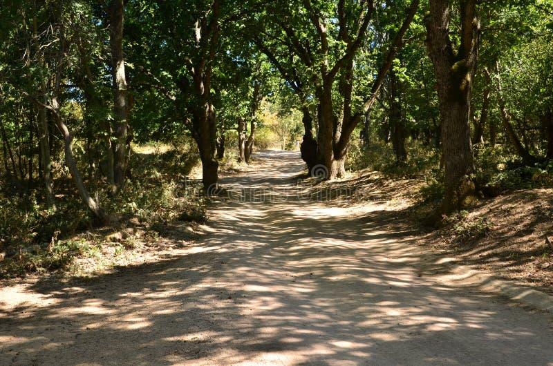 Camino en el bosque verde del roble fotos de archivo