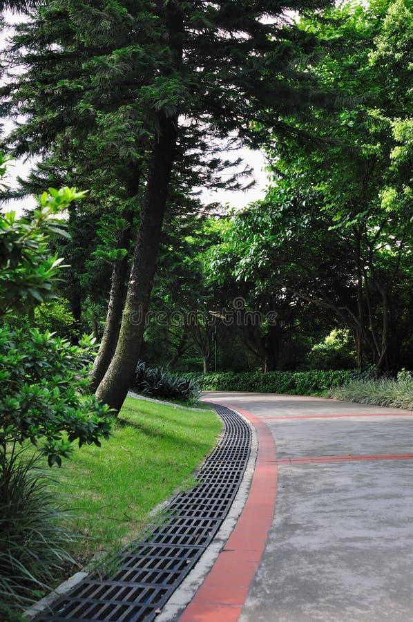 Camino en el jardín 4920