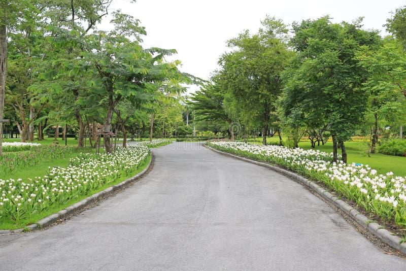 Camino en el jardín del verano con la flor y el árbol alrededor allí Parque verde pacífico y manera para el ejercicio y relajarse fotos de archivo