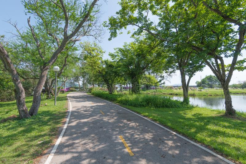Camino en el parque fotografía de archivo