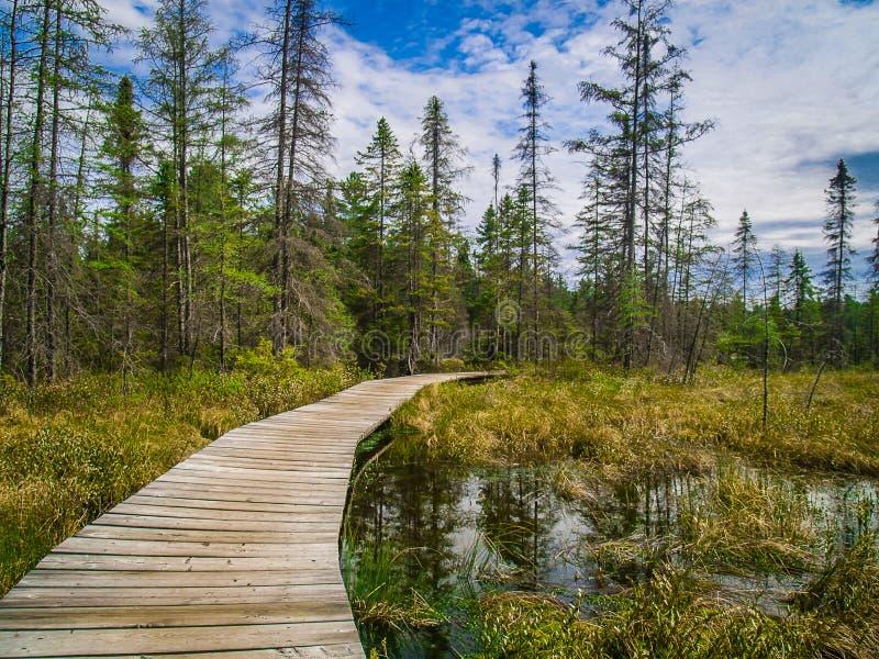 Camino en el parque del Algonquin, Canadá fotos de archivo