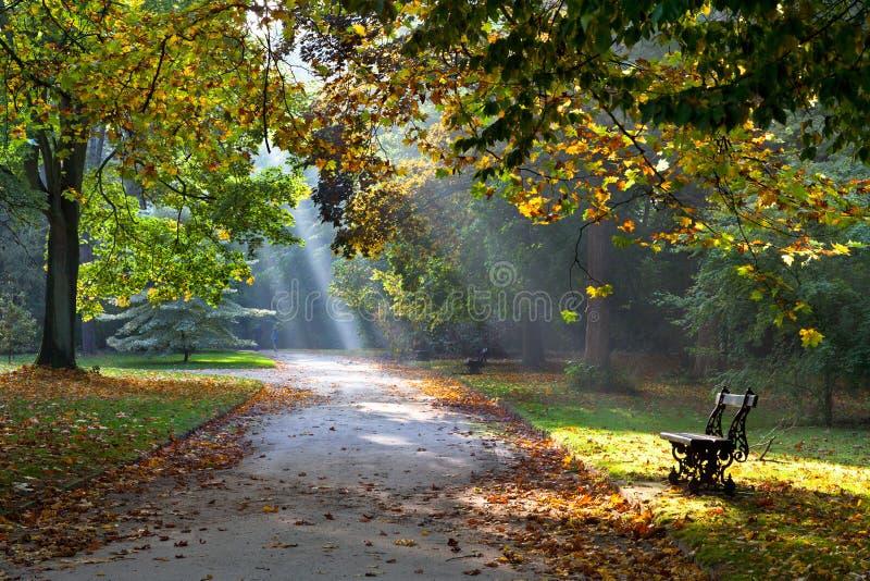 Camino en el parque del otoño. Luz del sol. El recorrer. fotos de archivo libres de regalías