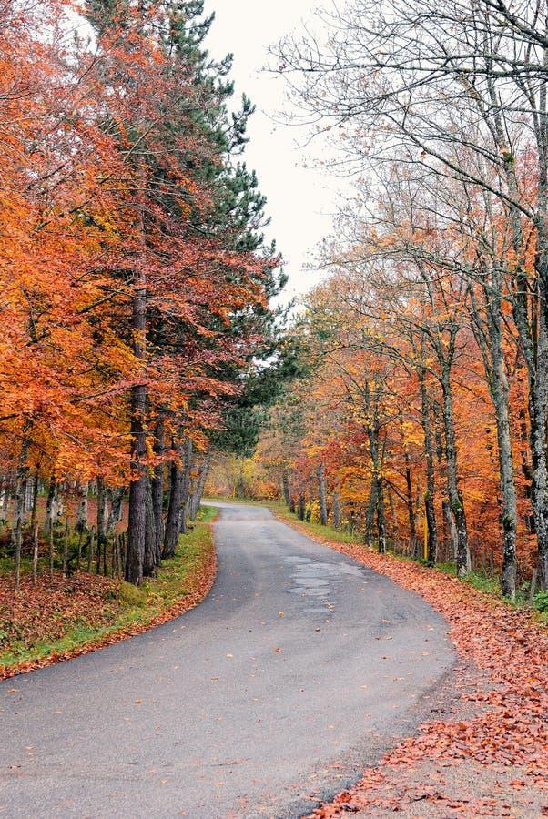 Camino en el parque en octubre imagen de archivo libre de regalías
