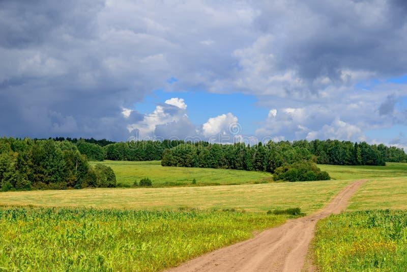 Camino en filds débiles del maíz en el campo siberiano con verano corto imagenes de archivo