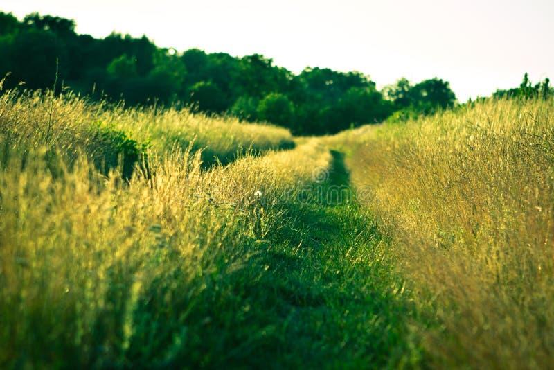 Camino en hierba imagenes de archivo