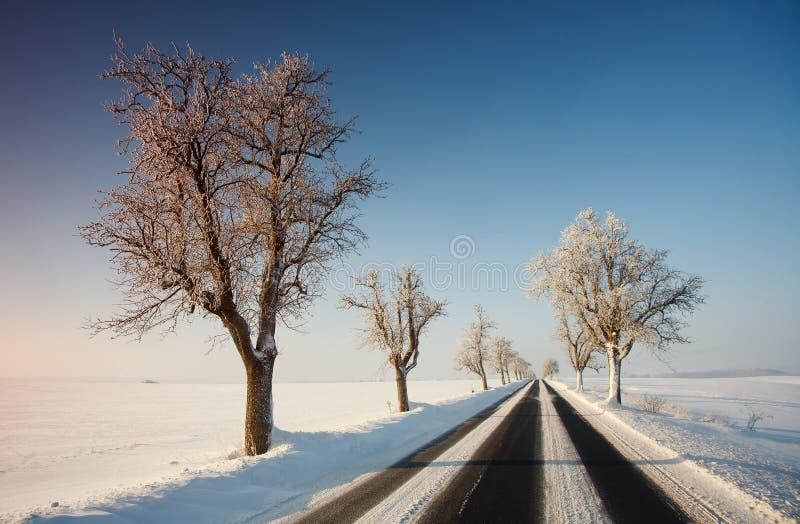 Camino en invierno fotos de archivo