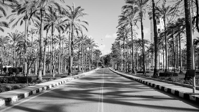 Camino en jardín del montaza imágenes de archivo libres de regalías