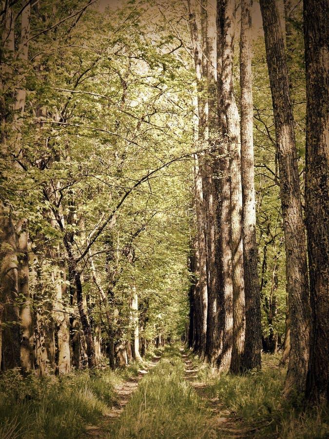 Camino en la naturaleza fotografía de archivo
