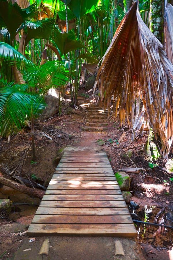 Camino en la selva, Vallee de el Mai, Seychelles fotografía de archivo
