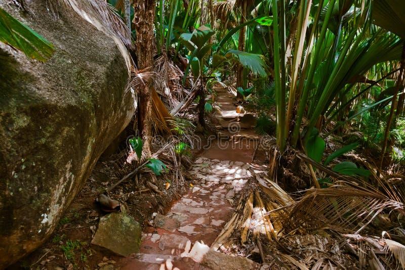 Camino en la selva - Vallee del Mai - Seychelles foto de archivo libre de regalías