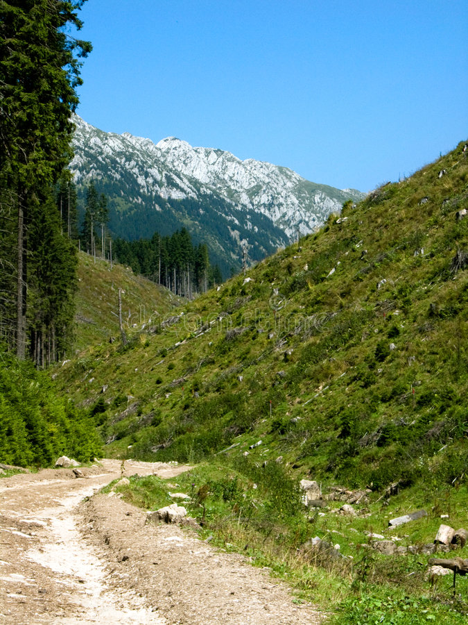 Camino en las montañas de Rumania imagen de archivo libre de regalías