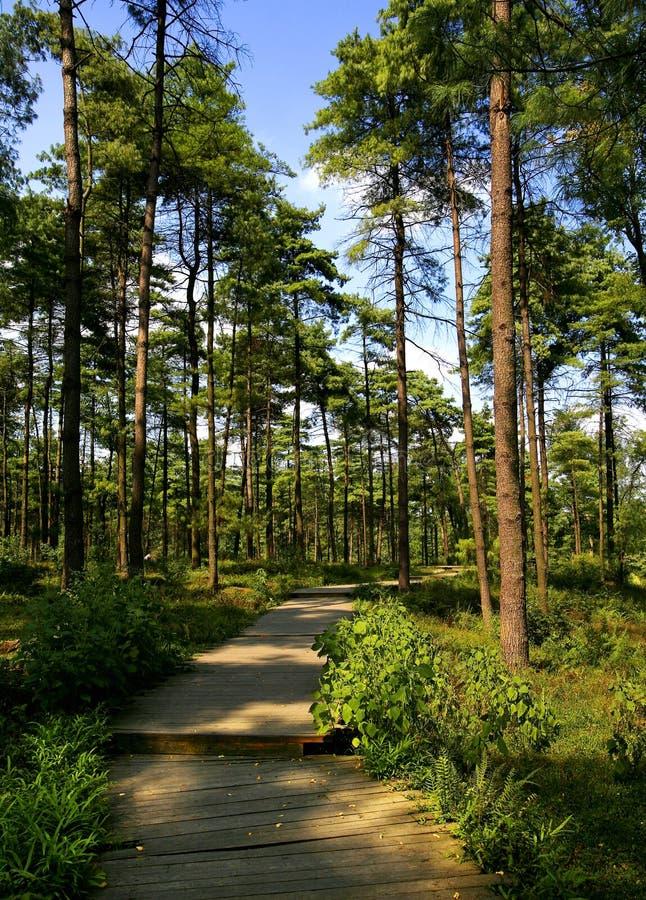 Camino en los bosques imagen de archivo