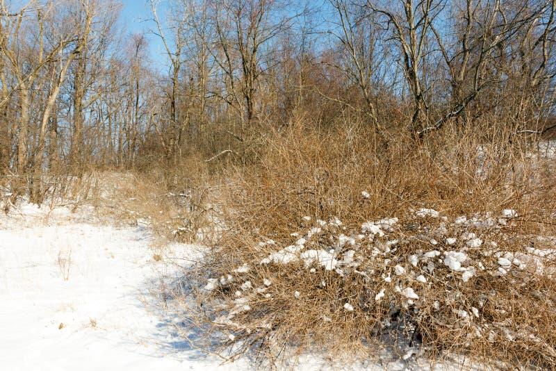 Camino en los bosques de invierno con ramas nevadas y áridas fotos de archivo libres de regalías