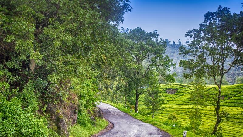 Camino en los jardines de té fotos de archivo libres de regalías