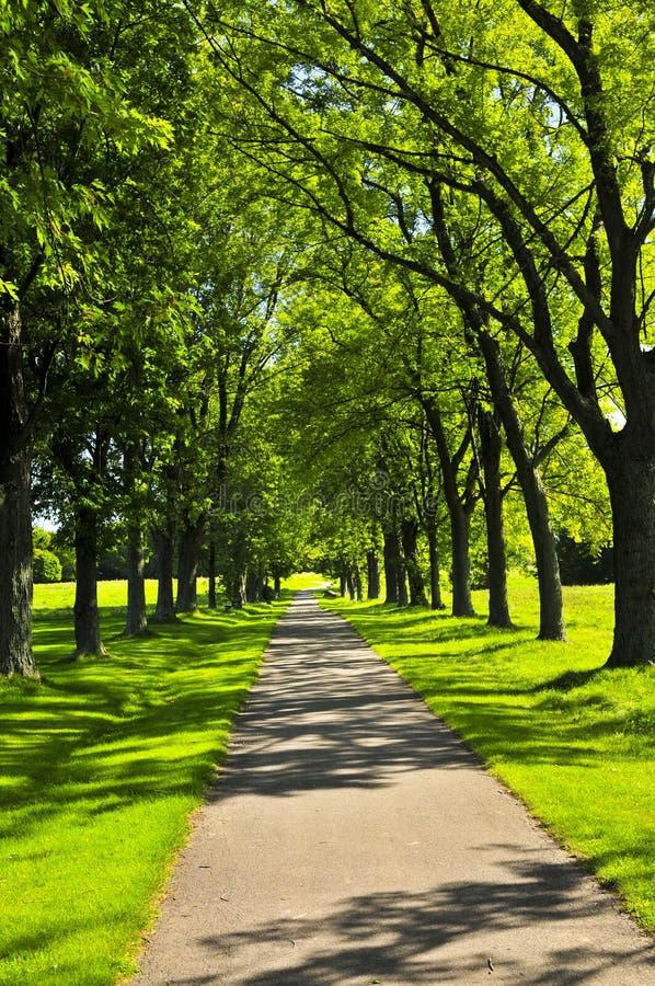 Camino en parque verde fotografía de archivo