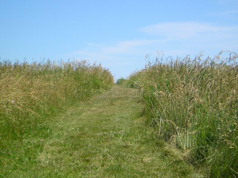 Download Camino en prado imagen de archivo. Imagen de hierba, descubrimiento - 183649