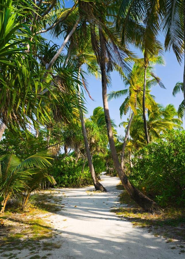 Camino en selva tropical fotos de archivo libres de regalías