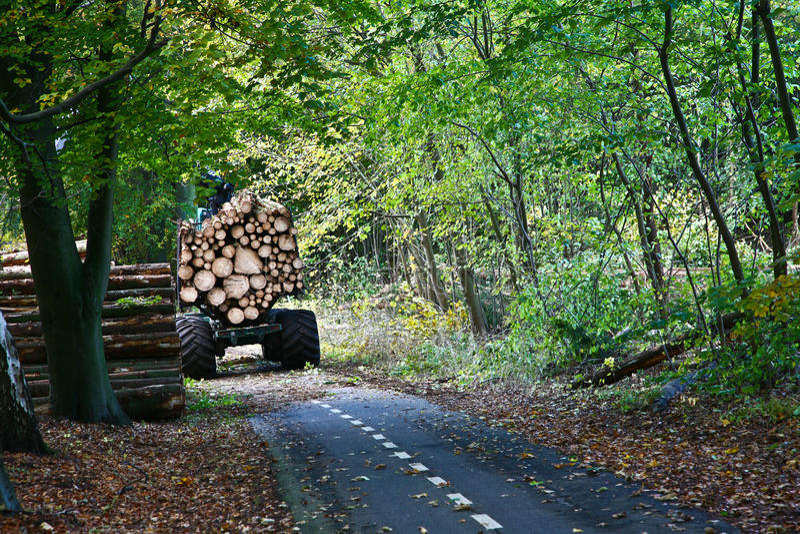 Camino en un bosque imágenes de archivo libres de regalías
