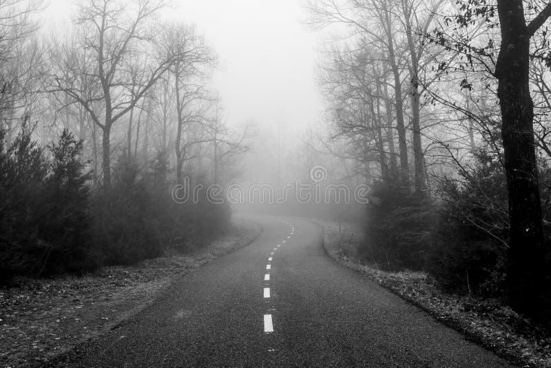Camino en un bosque brumoso imágenes de archivo libres de regalías