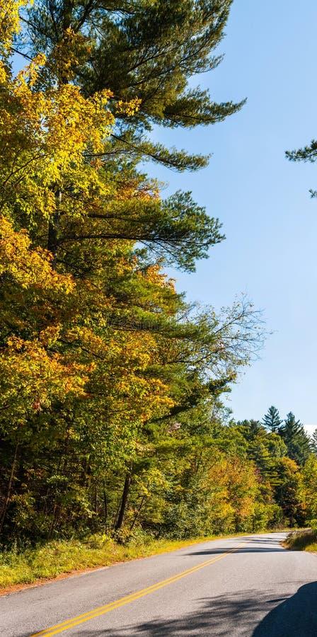 Camino en un bosque caótico foto de archivo libre de regalías