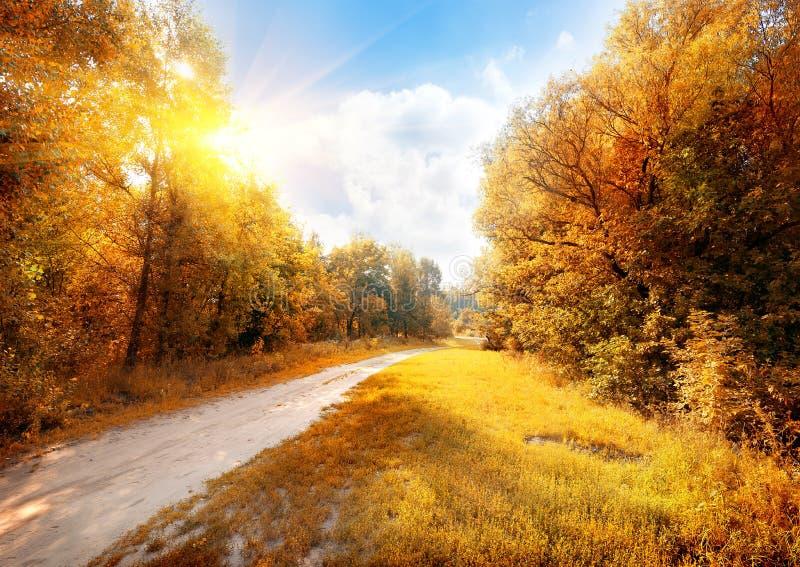 Camino en un bosque colorido del otoño foto de archivo libre de regalías