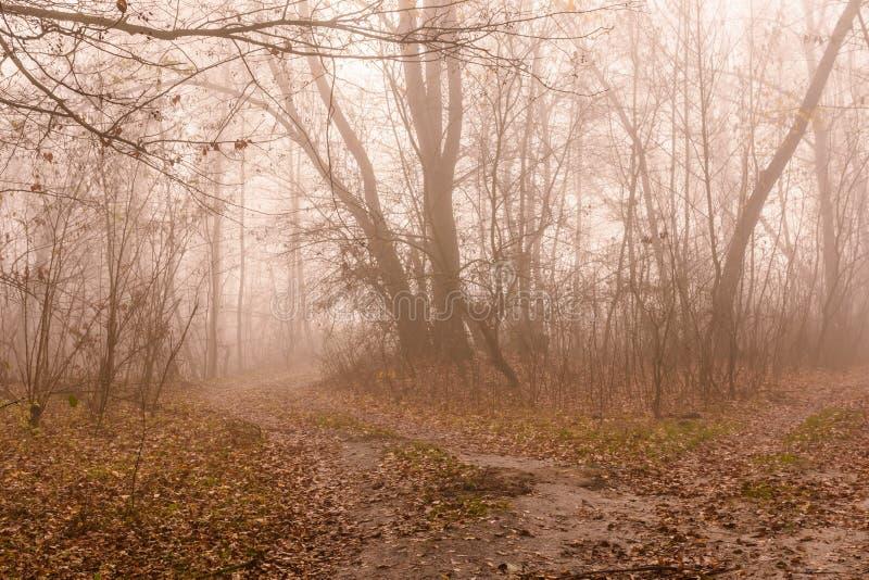 Camino en un bosque de niebla en día frío del otoño imagen de archivo libre de regalías