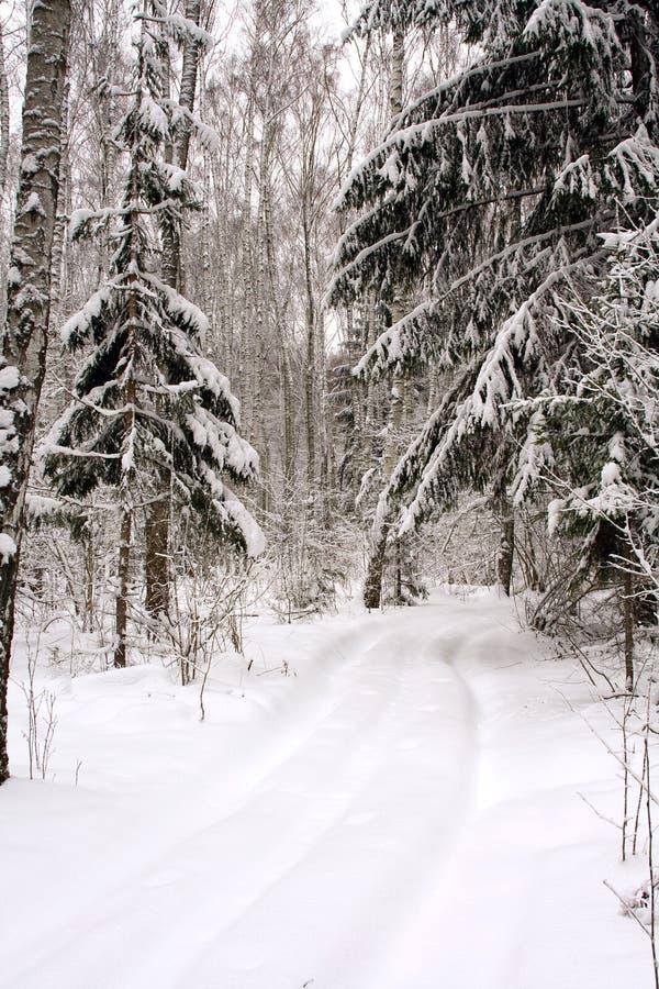 Camino en un bosque del invierno fotografía de archivo libre de regalías