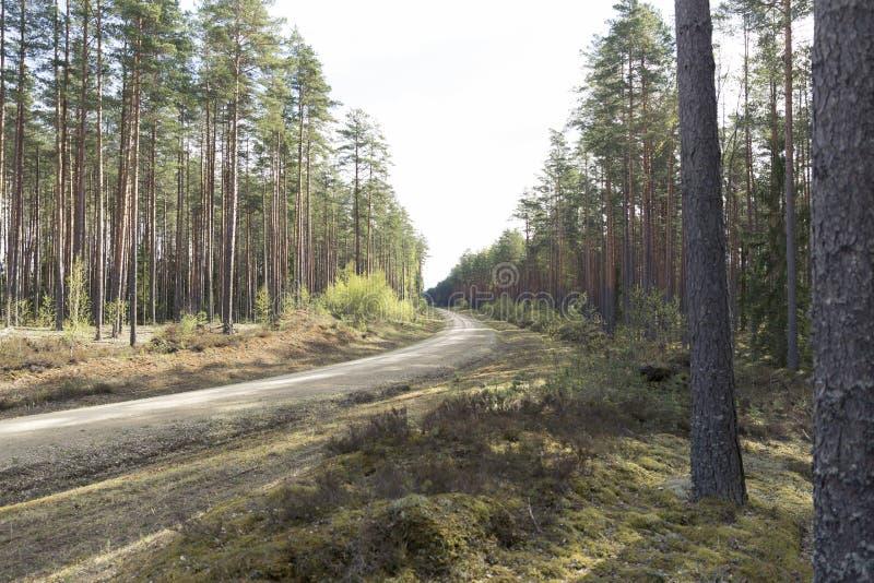 Camino en un bosque hermoso por la mañana Rastro del bosque foto de archivo libre de regalías