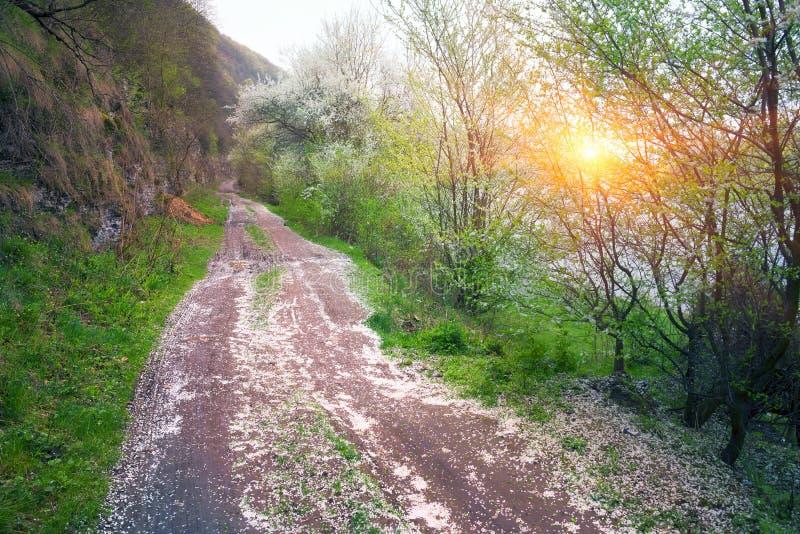 Camino entre las cerezas foto de archivo