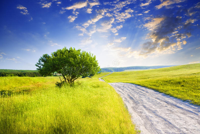 Camino entre prado verde fotografía de archivo