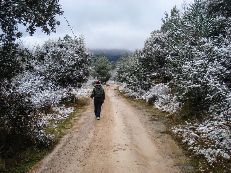 Camino esc?nico del invierno a trav?s del bosque cubierto en nieve despu?s de nevadas Moncayo, España fotografía de archivo libre de regalías