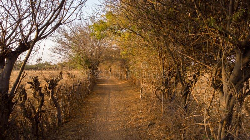 Camino estrecho con la cerca viva seca en cualquier lados manera rugosa fangosa imágenes de archivo libres de regalías