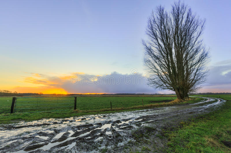 Camino fangoso de la arena con los árboles en la salida del sol fotografía de archivo
