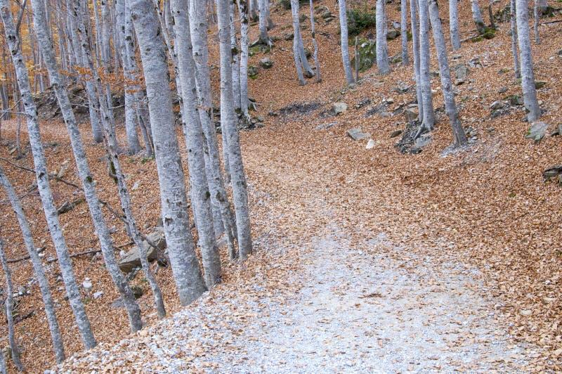 Camino forestal imagen de archivo