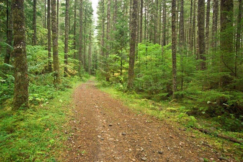 Download Camino forestal foto de archivo. Imagen de hemlock, verde - 7278120