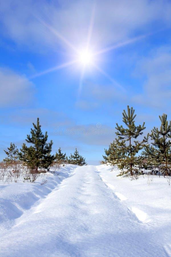 Camino forestal bajo nieve fotografía de archivo