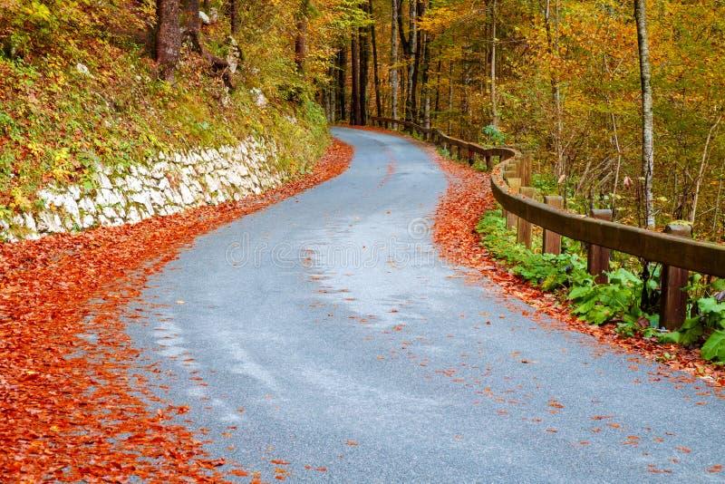 Camino forestal de la bobina en colores hermosos del otoño cerca del lago Bohinj fotos de archivo