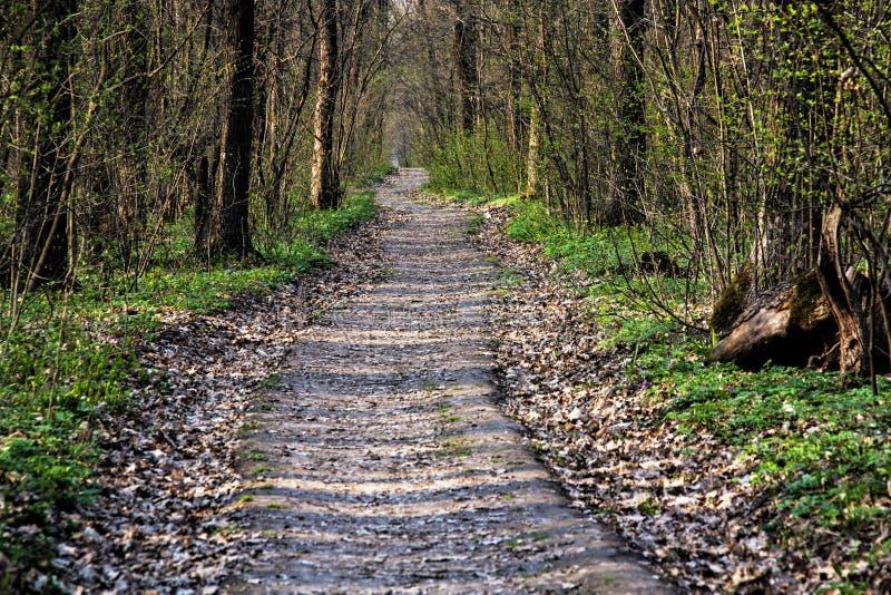 Camino forestal de la primavera en el bosque foto de archivo